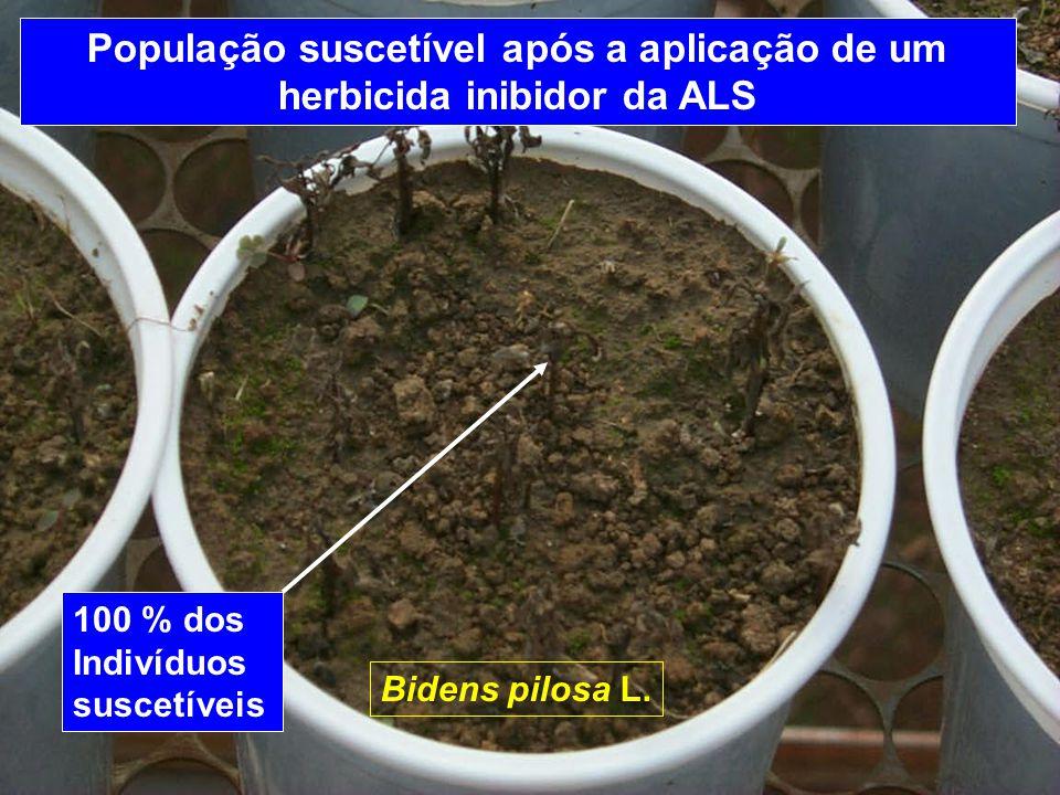 População suscetível após a aplicação de um herbicida inibidor da ALS