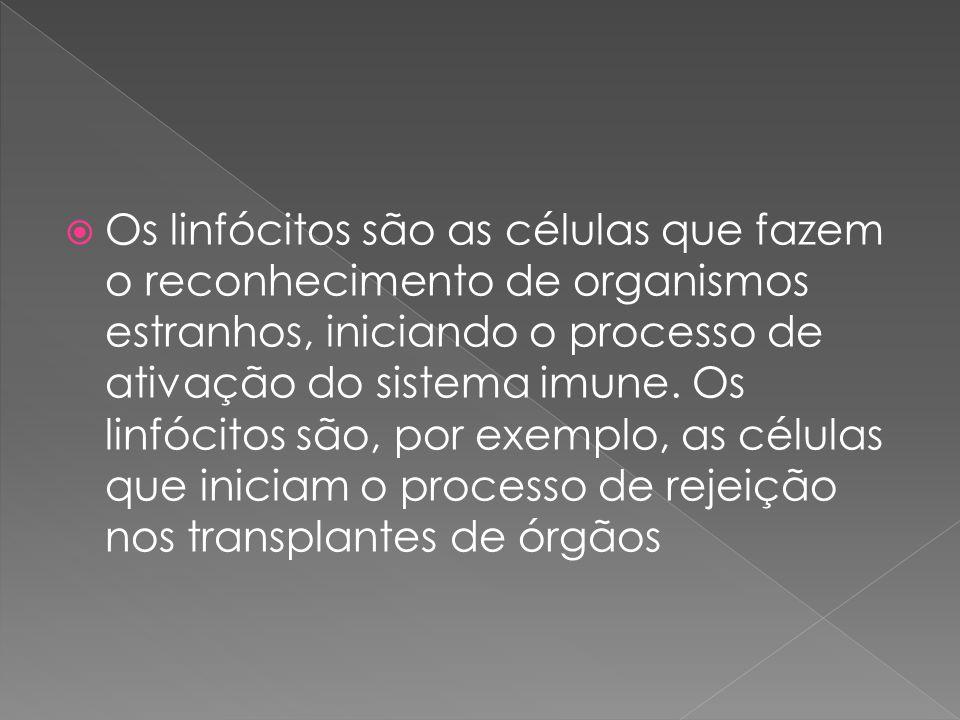 Os linfócitos são as células que fazem o reconhecimento de organismos estranhos, iniciando o processo de ativação do sistema imune.