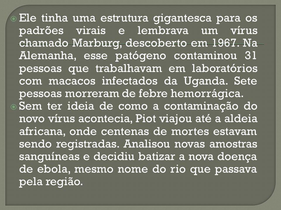 Ele tinha uma estrutura gigantesca para os padrões virais e lembrava um vírus chamado Marburg, descoberto em 1967. Na Alemanha, esse patógeno contaminou 31 pessoas que trabalhavam em laboratórios com macacos infectados da Uganda. Sete pessoas morreram de febre hemorrágica.