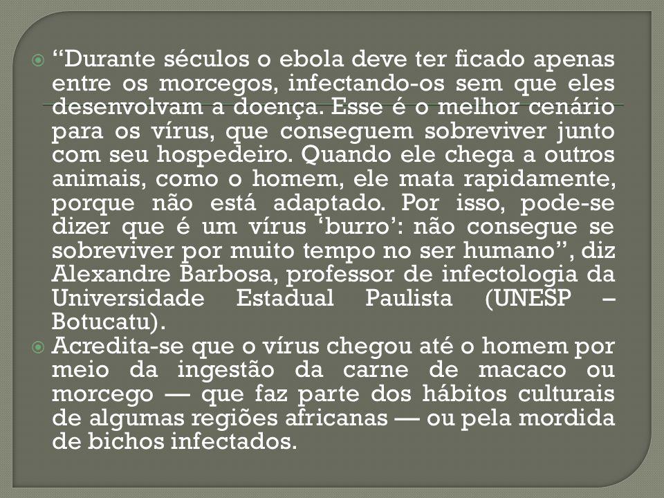 Durante séculos o ebola deve ter ficado apenas entre os morcegos, infectando-os sem que eles desenvolvam a doença. Esse é o melhor cenário para os vírus, que conseguem sobreviver junto com seu hospedeiro. Quando ele chega a outros animais, como o homem, ele mata rapidamente, porque não está adaptado. Por isso, pode-se dizer que é um vírus 'burro': não consegue se sobreviver por muito tempo no ser humano , diz Alexandre Barbosa, professor de infectologia da Universidade Estadual Paulista (UNESP – Botucatu).