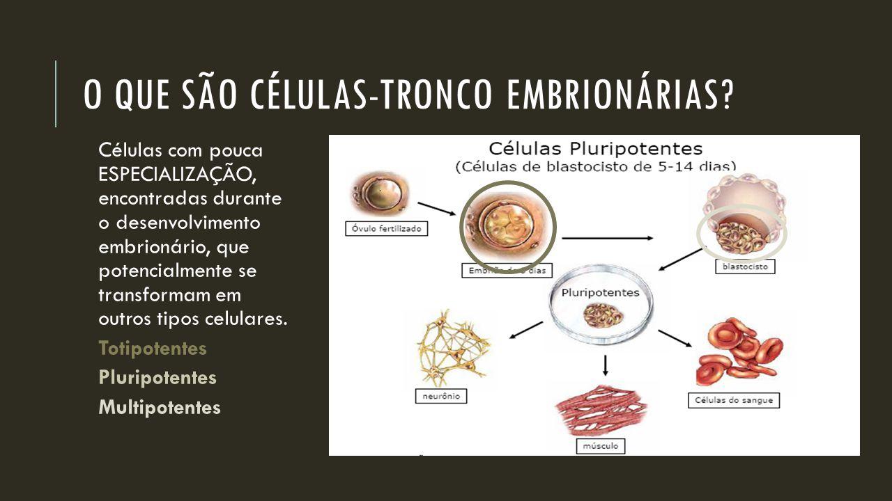 O que são Células-Tronco Embrionárias