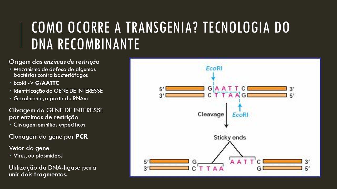 COMO OCORRE A TRANSGENIA TECNOLOGIA DO DNA RECOMBINANTE
