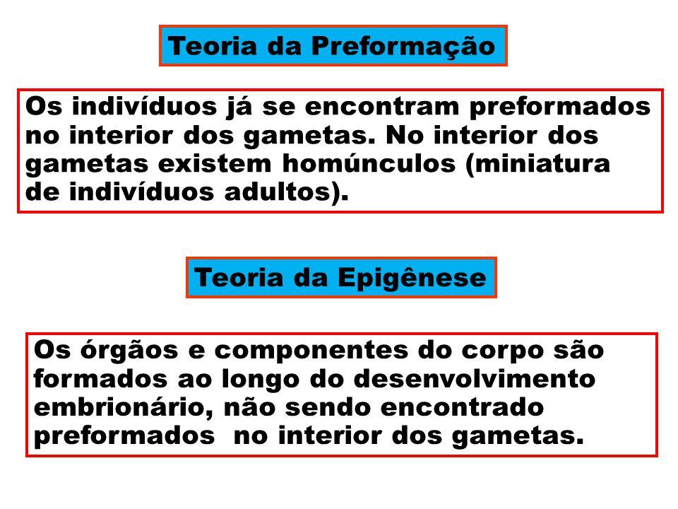 Teoria da Preformação Os indivíduos já se encontram preformados.
