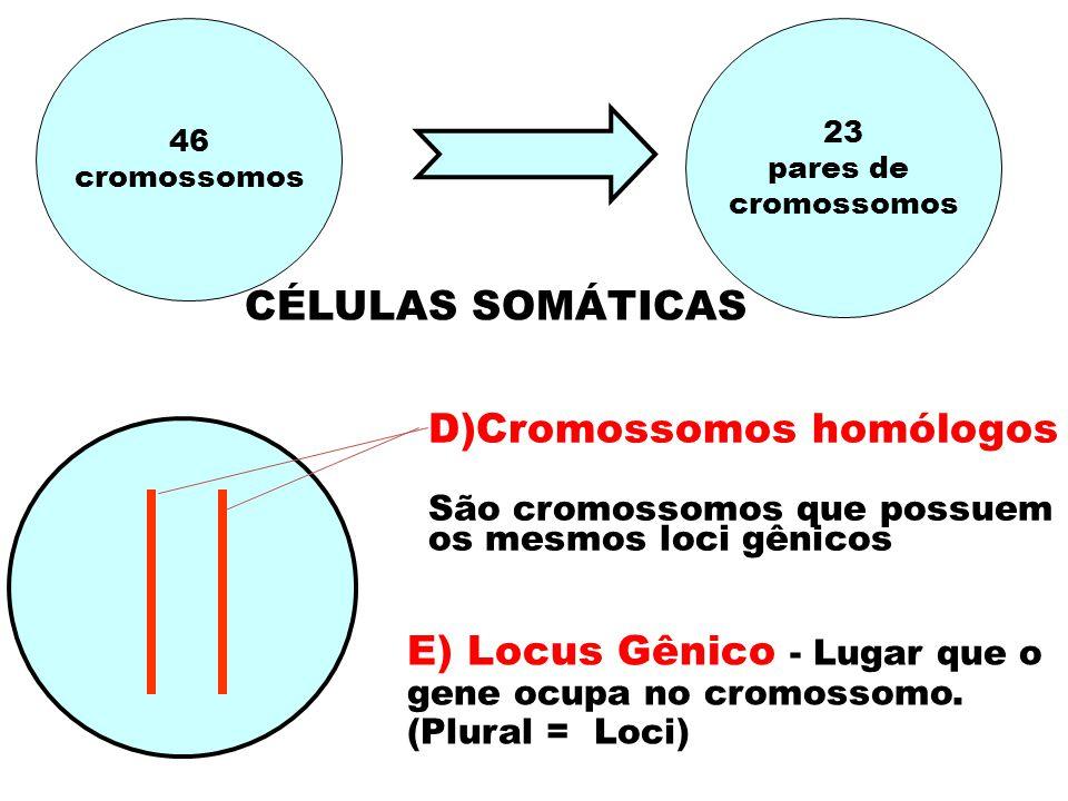 D)Cromossomos homólogos