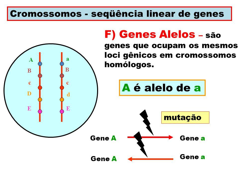 Cromossomos - seqüência linear de genes