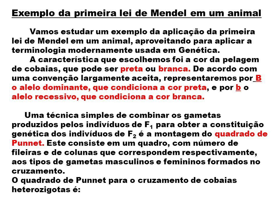 Exemplo da primeira lei de Mendel em um animal