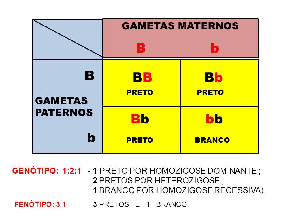 B b GAMETAS MATERNOS B GAMETAS PATERNOS b