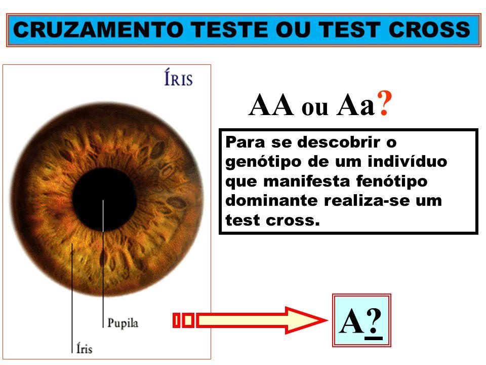 A AA ou Aa CRUZAMENTO TESTE OU TEST CROSS