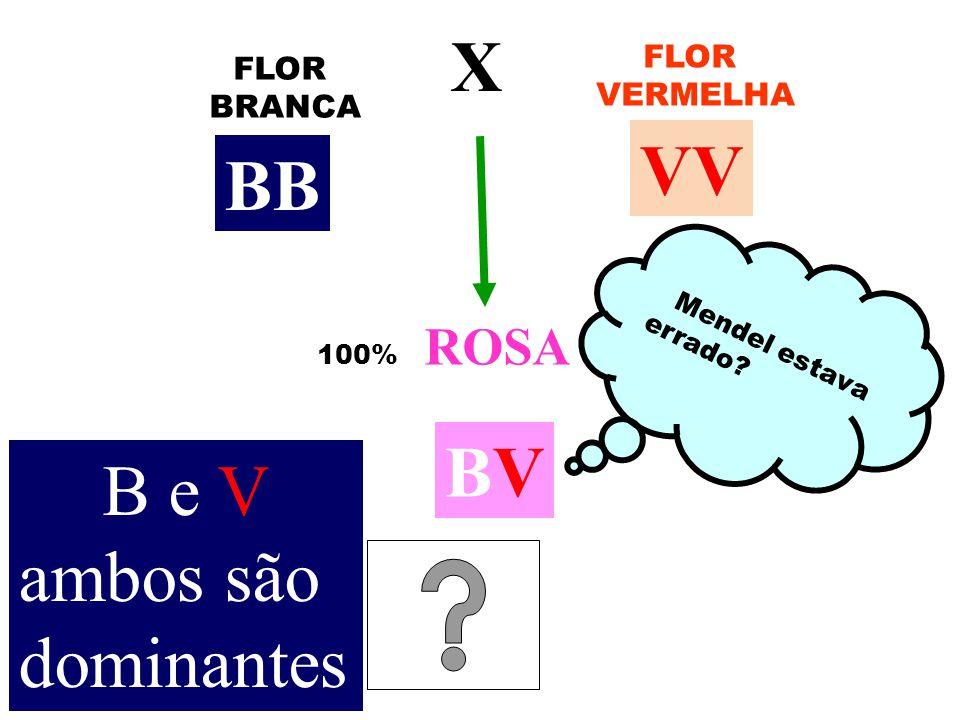 X VV BB BV B e V ambos são dominantes FLOR FLOR VERMELHA BRANCA