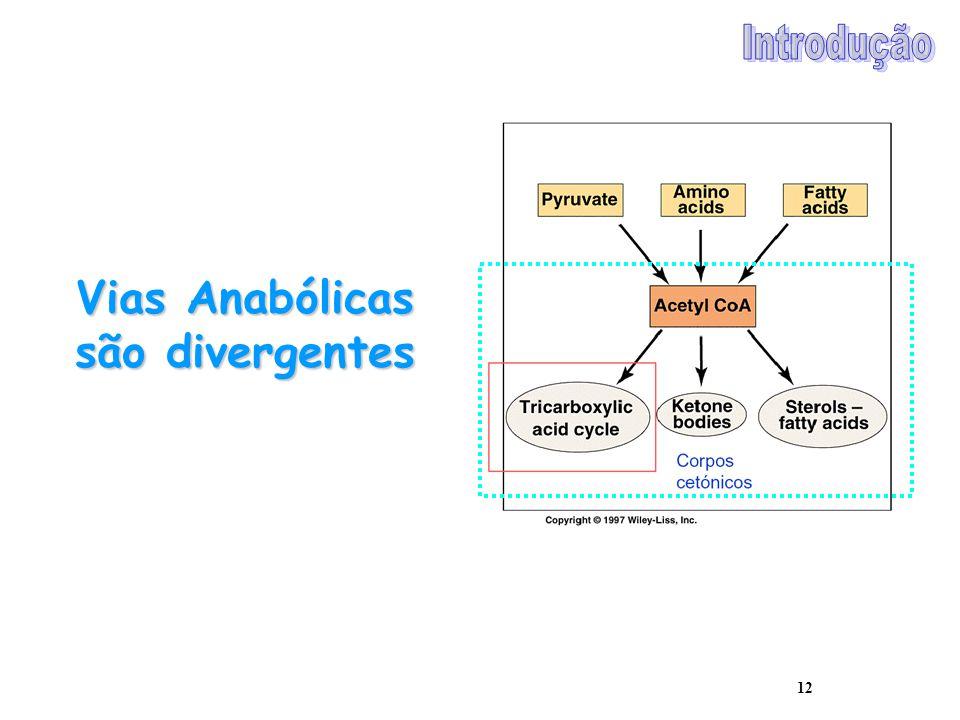 Vias Anabólicas são divergentes