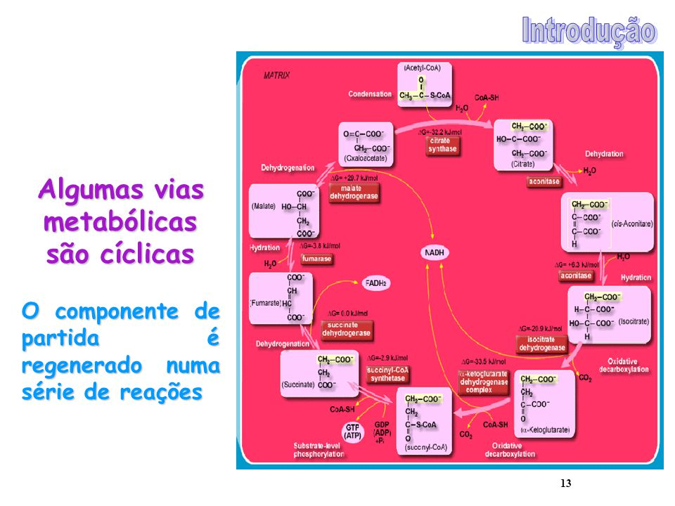 Algumas vias metabólicas são cíclicas