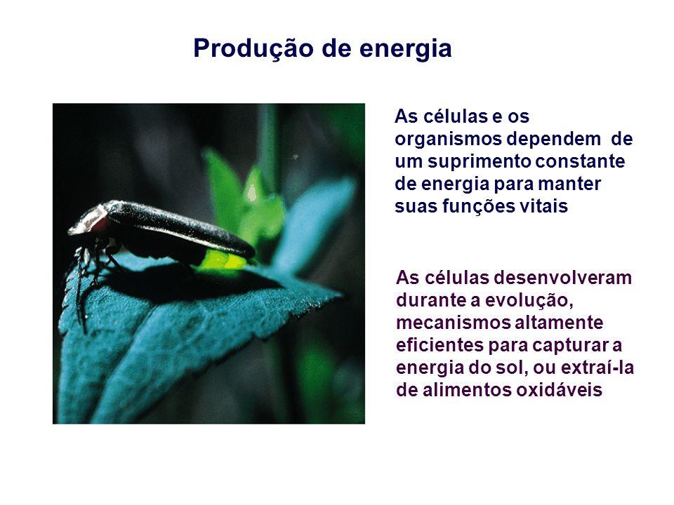 Produção de energia As células e os organismos dependem de um suprimento constante de energia para manter suas funções vitais.