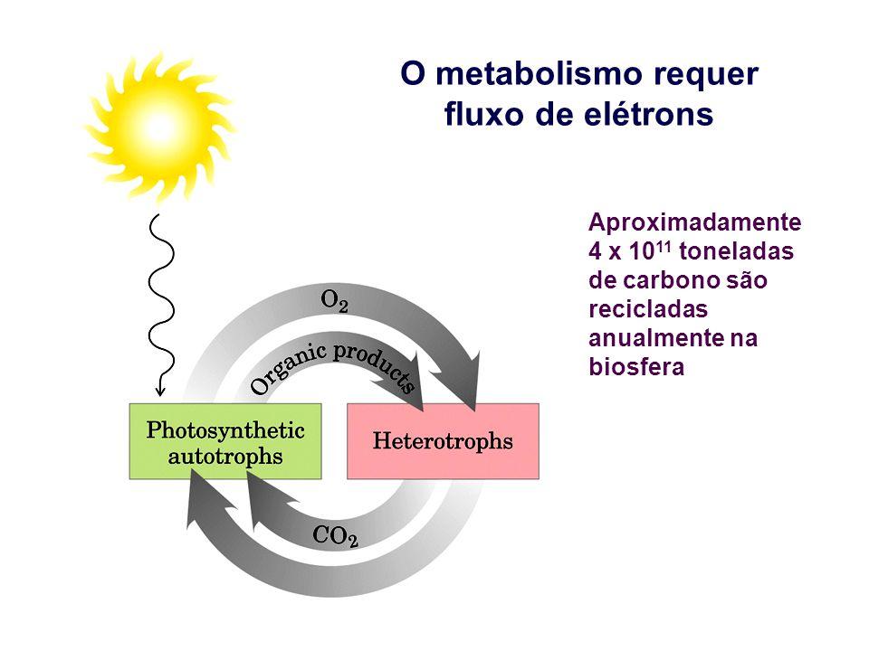 O metabolismo requer fluxo de elétrons