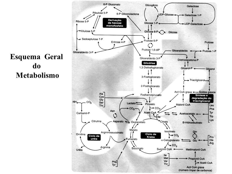 Esquema Geral do Metabolismo
