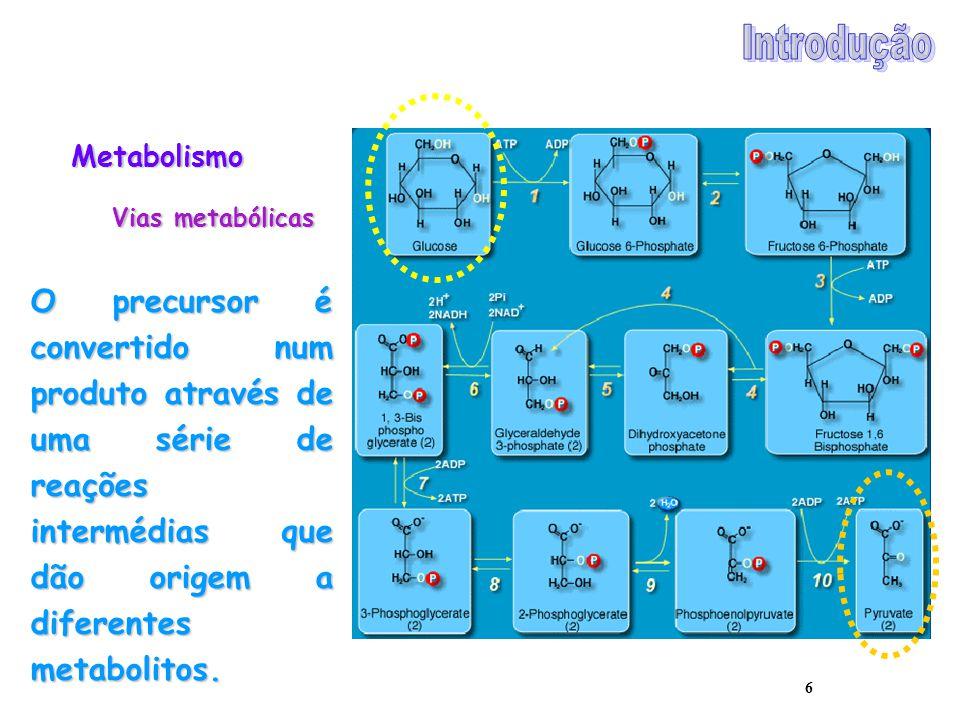Introdução Metabolismo. Vias metabólicas.