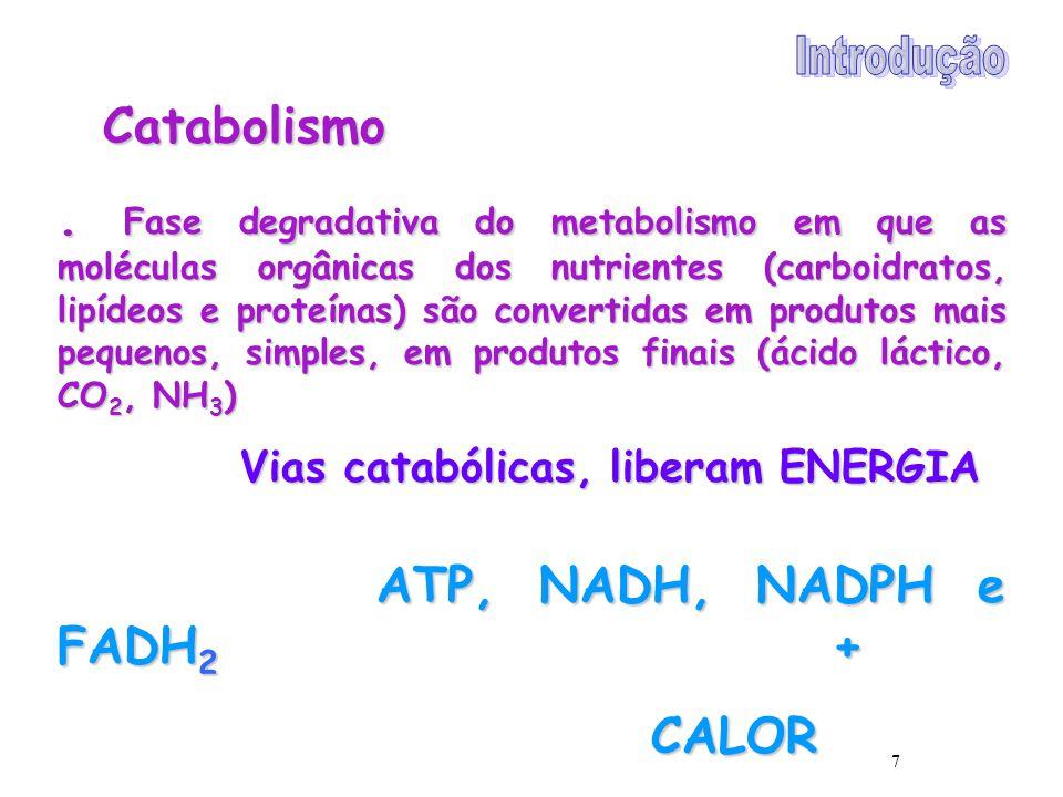Introdução Catabolismo.