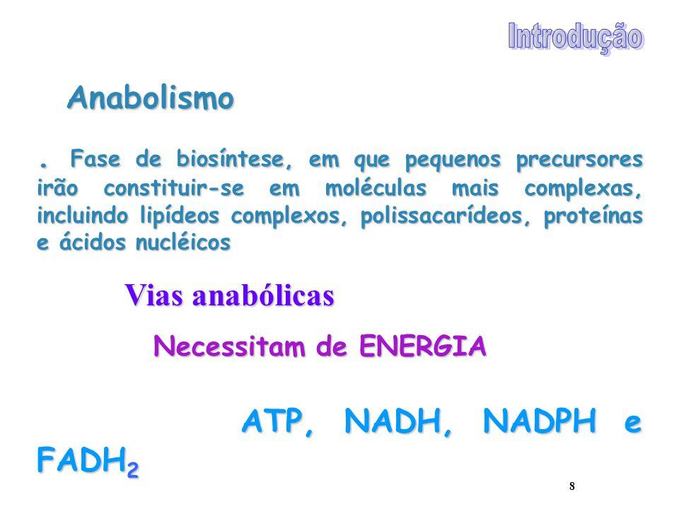 Introdução Anabolismo.