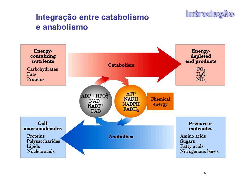 Integração entre catabolismo e anabolismo