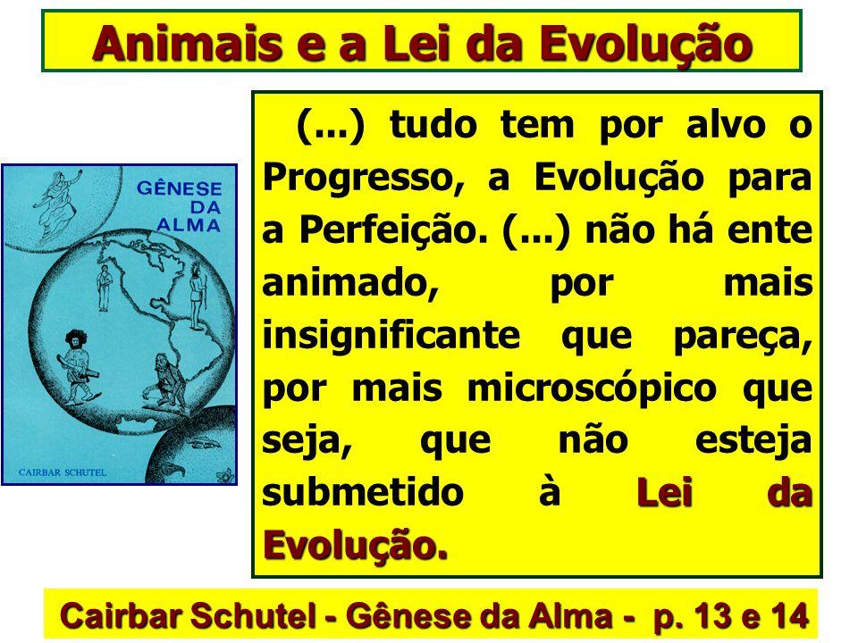 Animais e a Lei da Evolução