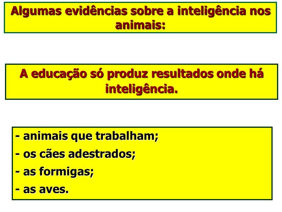 Algumas evidências sobre a inteligência nos animais:
