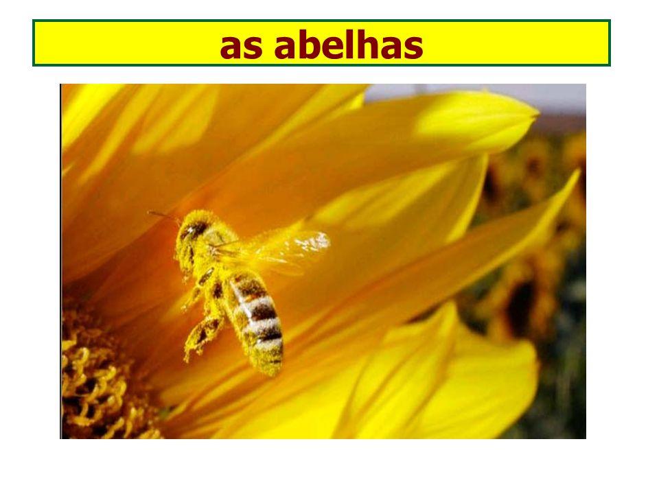 as abelhas