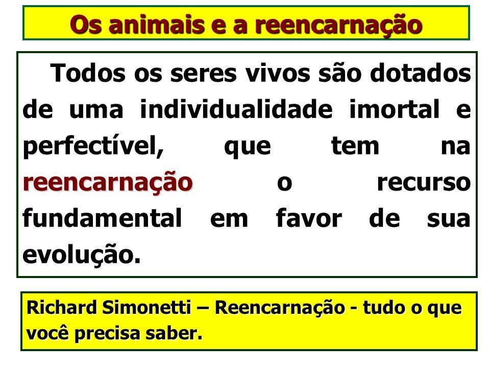 Os animais e a reencarnação