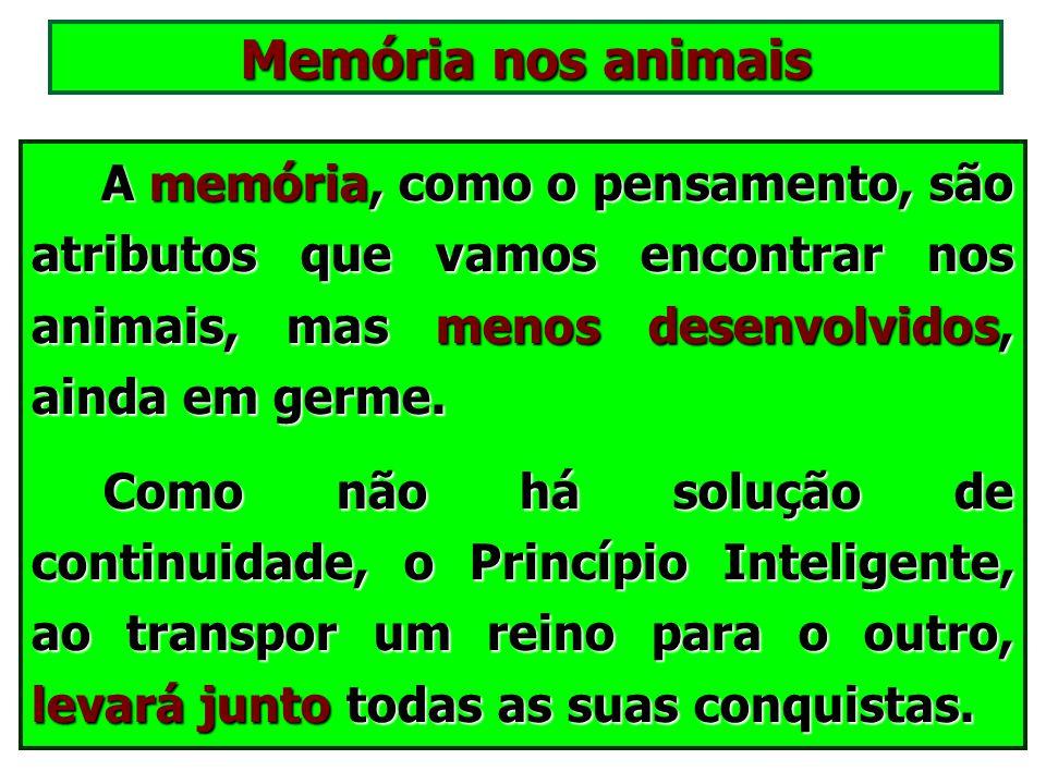 Memória nos animais A memória, como o pensamento, são atributos que vamos encontrar nos animais, mas menos desenvolvidos, ainda em germe.