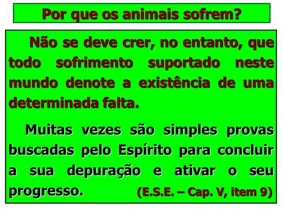 Por que os animais sofrem