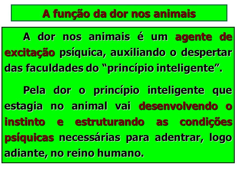 A função da dor nos animais