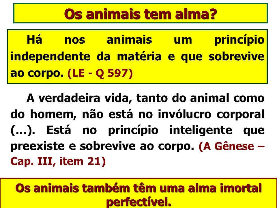 Os animais também têm uma alma imortal perfectível.