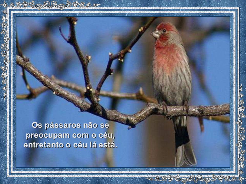 Os pássaros não se preocupam com o céu, entretanto o céu lá está.