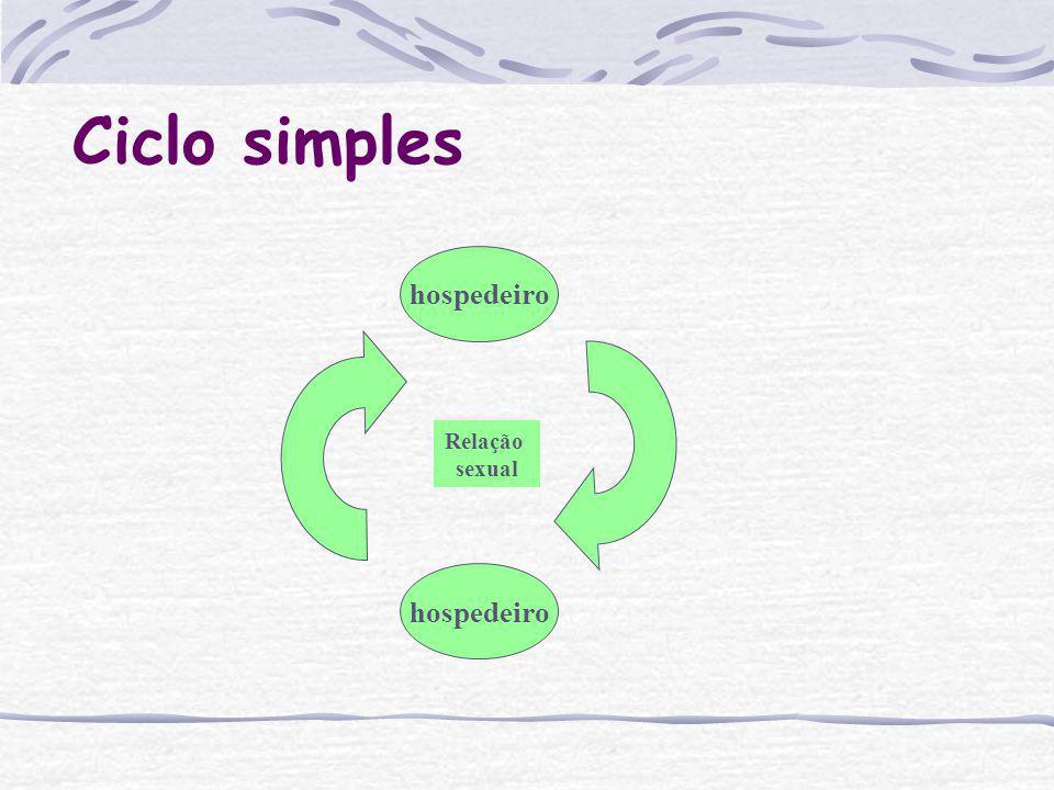 Ciclo simples hospedeiro Relação sexual hospedeiro