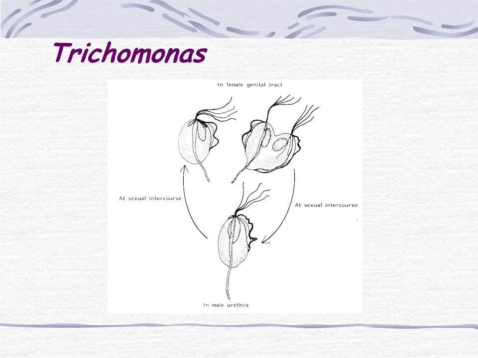 Trichomonas