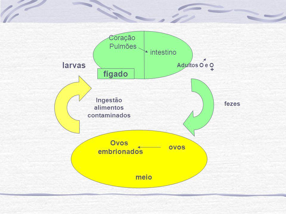 larvas fígado Coração Pulmões intestino Ovos embrionados ovos meio +