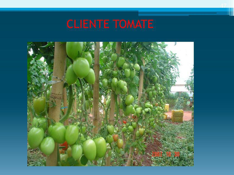 CLIENTE TOMATE