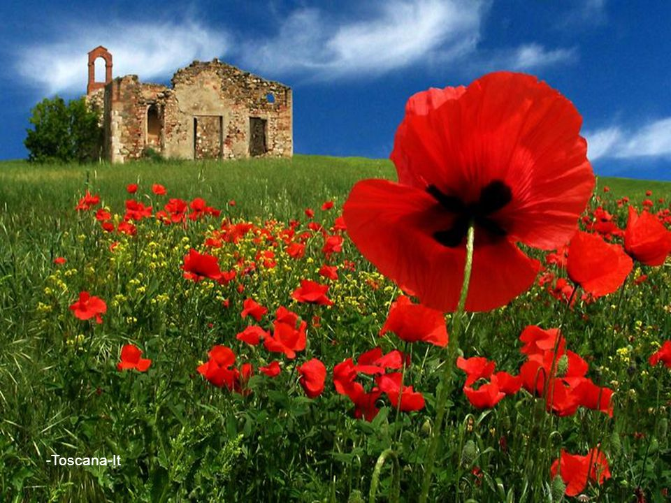 -Toscana-It