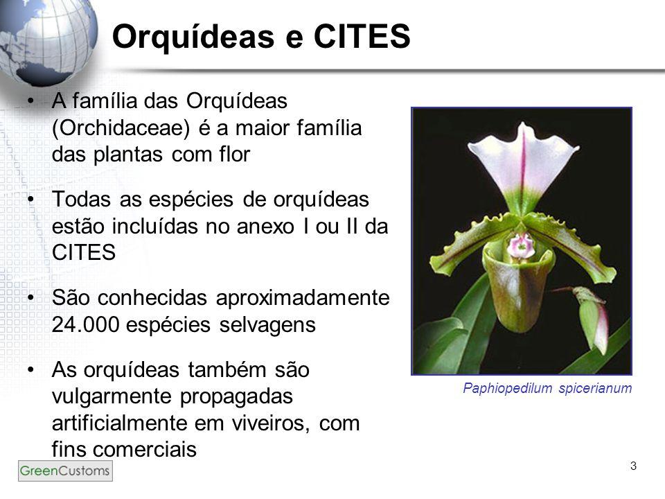 Orquídeas e CITES A família das Orquídeas (Orchidaceae) é a maior família das plantas com flor.
