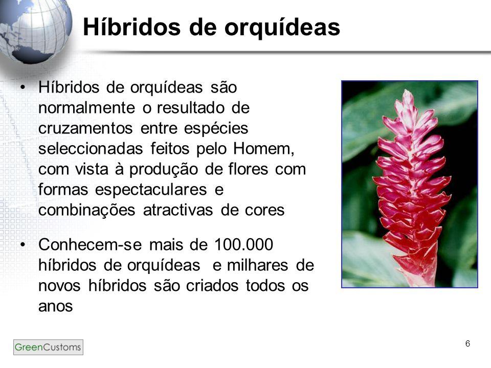 Híbridos de orquídeas