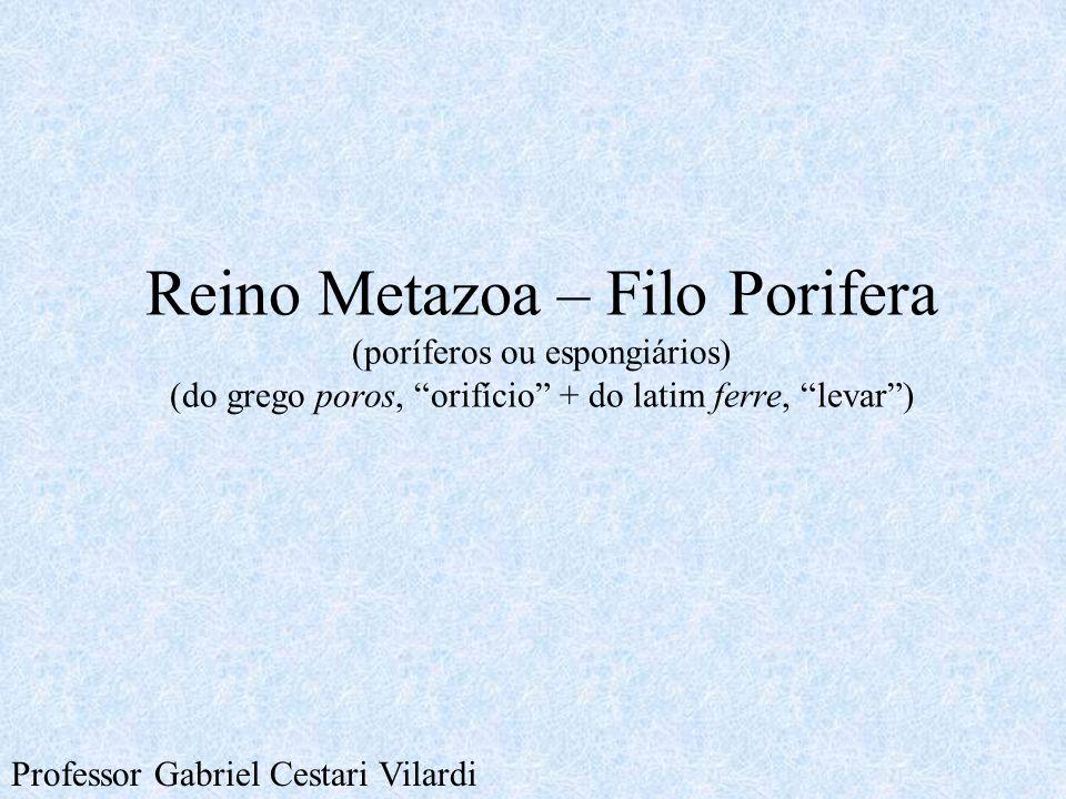 Reino Metazoa – Filo Porifera (poríferos ou espongiários) (do grego poros, orifício + do latim ferre, levar )
