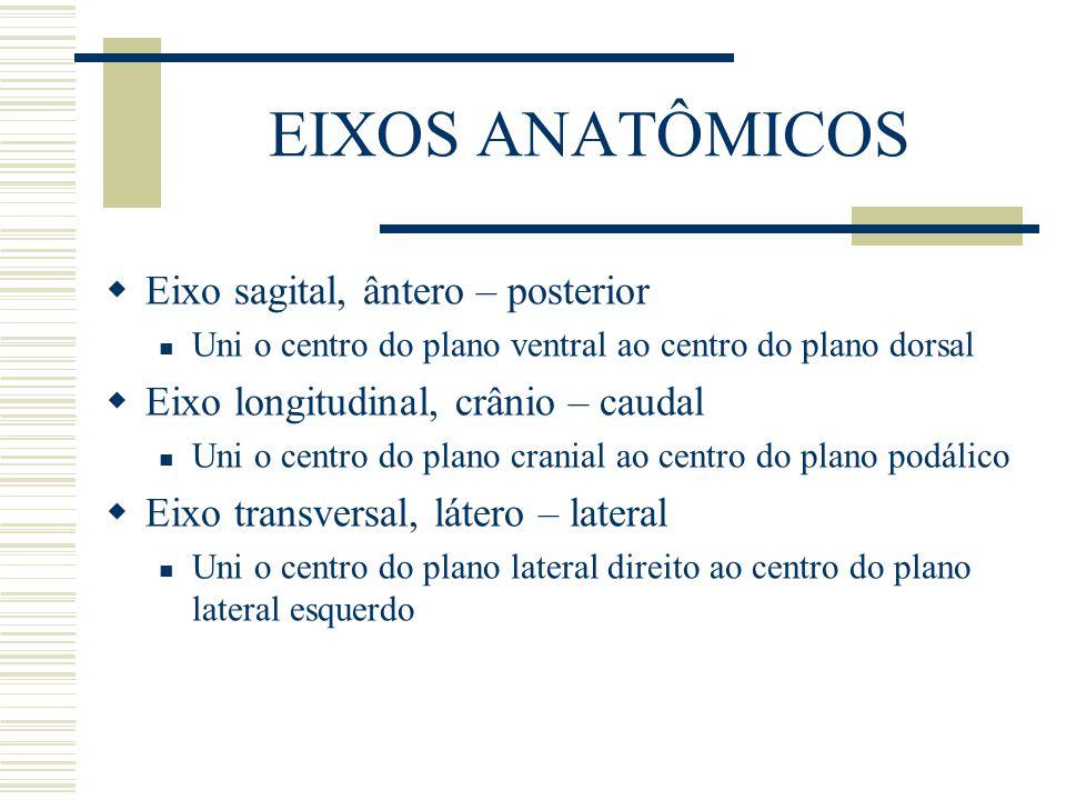 EIXOS ANATÔMICOS Eixo sagital, ântero – posterior