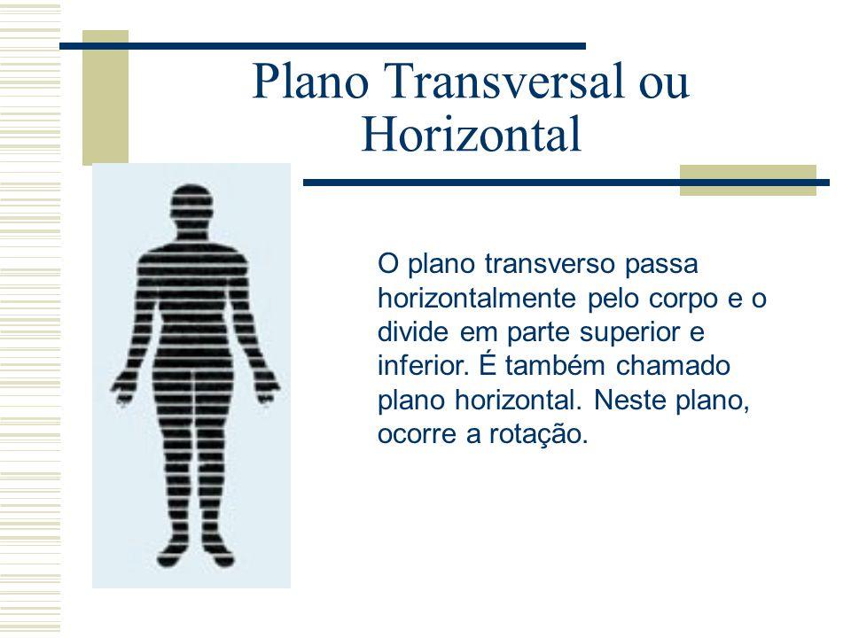 Vistoso Anatomía Plano Transversal Imágenes - Anatomía de Las ...