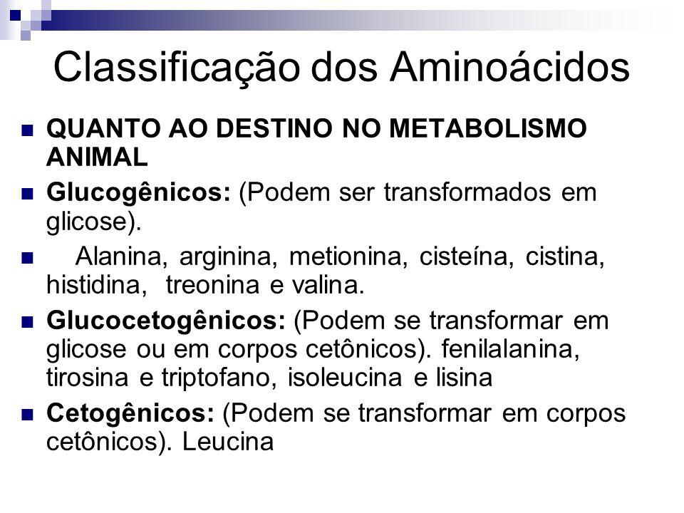 Classificação dos Aminoácidos