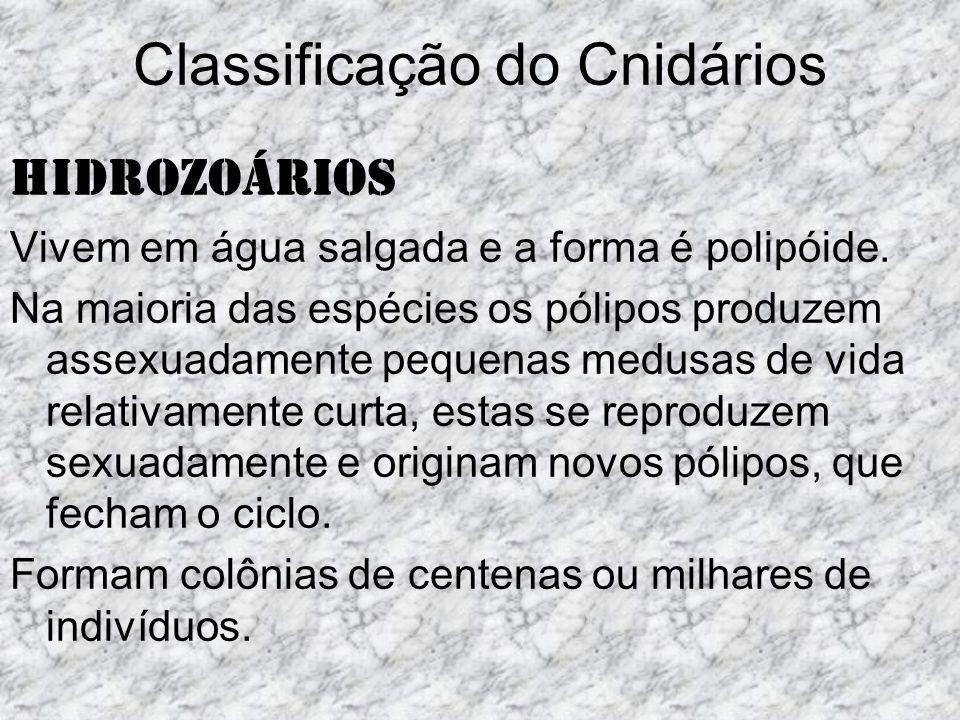Classificação do Cnidários