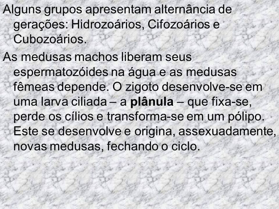 Alguns grupos apresentam alternância de gerações: Hidrozoários, Cifozoários e Cubozoários.
