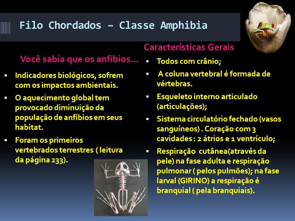 Filo Chordados – Classe Amphibia
