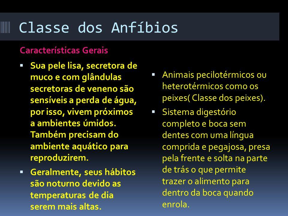 Classe dos Anfíbios Características Gerais