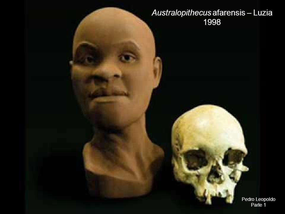 Australopithecus afarensis – Luzia 1998