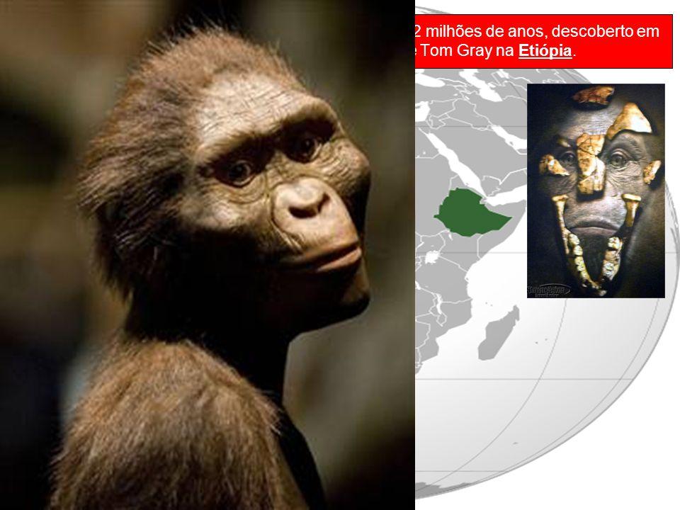 Lucy é um fóssil de Australopithecus afarensis de 3,2 milhões de anos, descoberto em 1974 pelo professor Donald Johanson e pelo estudante Tom Gray na Etiópia.
