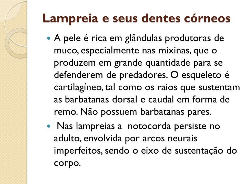Lampreia e seus dentes córneos