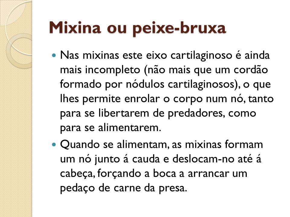 Mixina ou peixe-bruxa